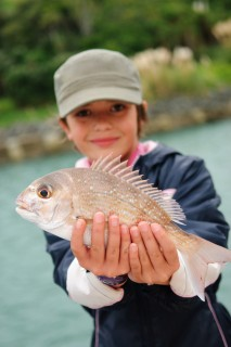 Snapper future sought
