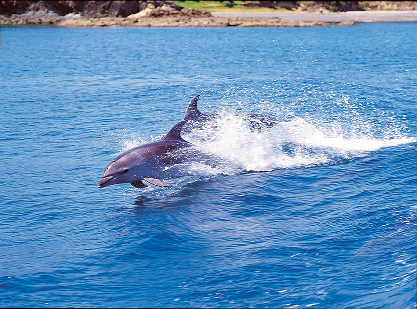 Great barrier, Ocean, Dolphins