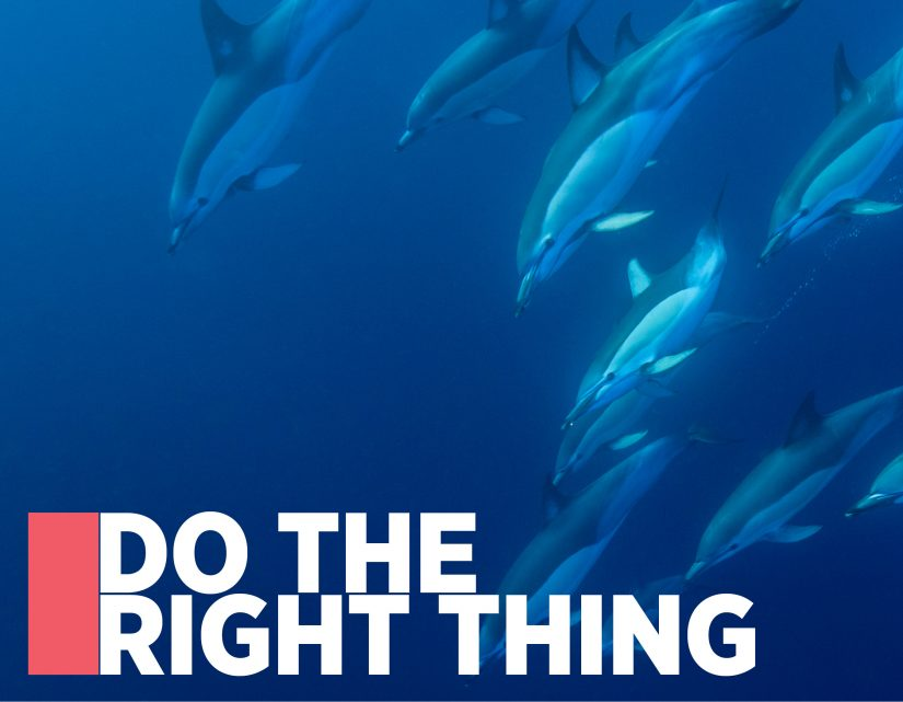 Do The Right Thing: The 2016 Hauraki Gulf Marine Park Seminar