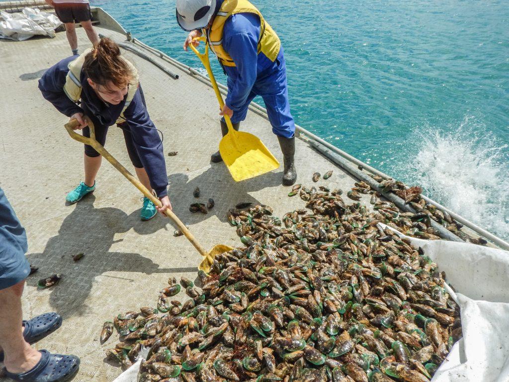Volunteers doing mussel reef restoration - Photo by Shaun Lee