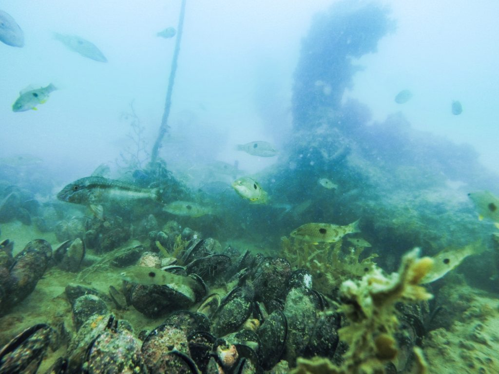 A previously restored mussel reef near Waiheke Island - Photo by Shaun Lee