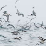 Seabirds by Edin Whitehead