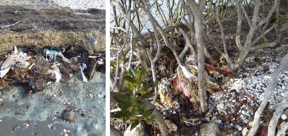Rubbish in mangroves