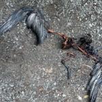 Dead taiko chick