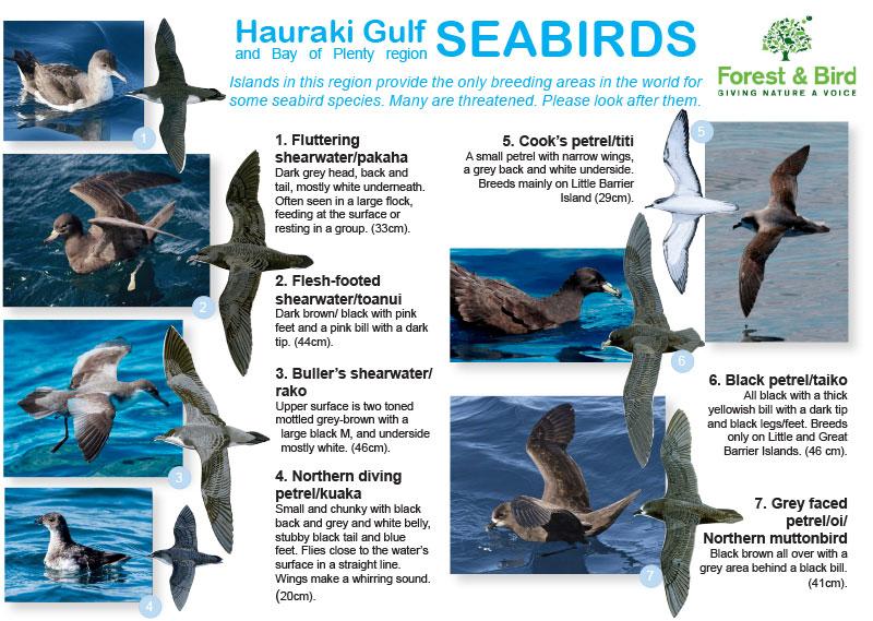 Seabird ID Guide 2016