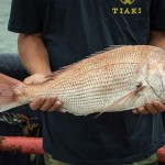 Tiaki caught snapper