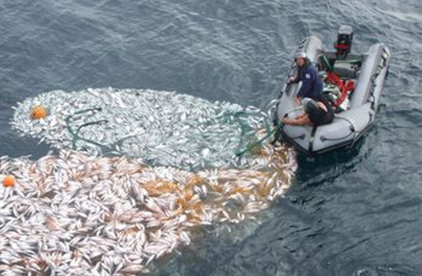 Illegally dumped snapper in December 2010