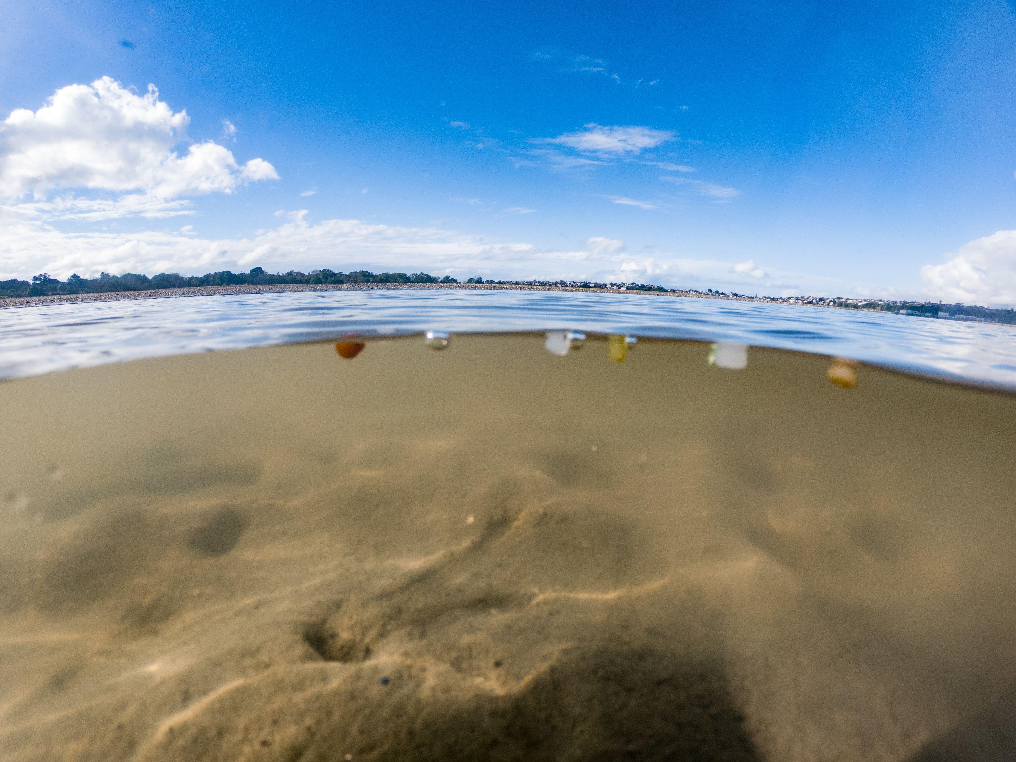 Nurdles floating in the Tamaki Estuary